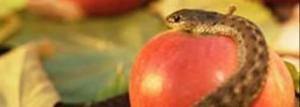 serpent_apple