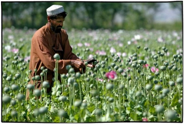 afghandrugs