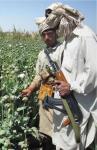 Drug Money Fuels Taliban